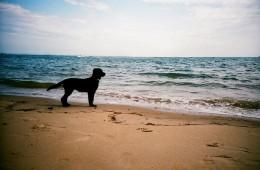 pazzo per il mare