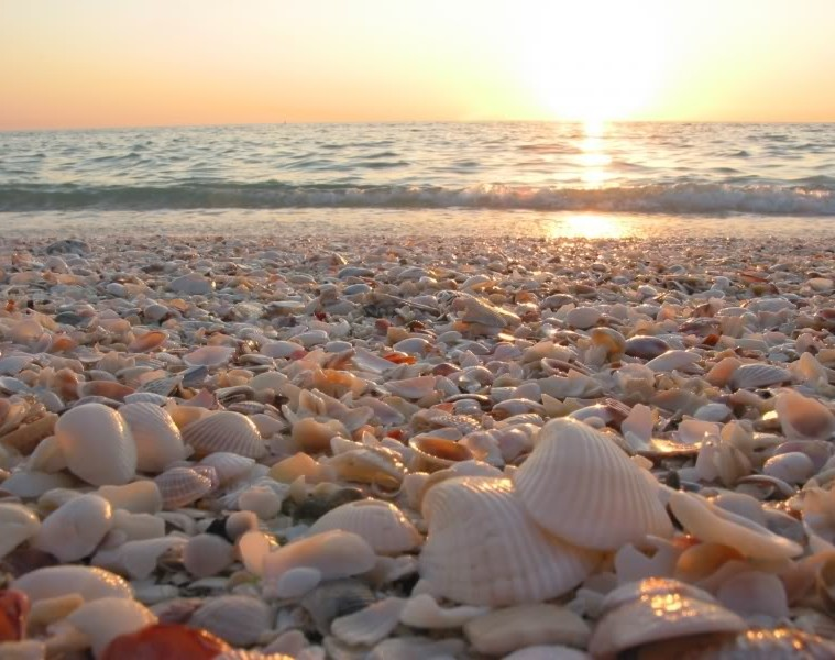 seashells-2